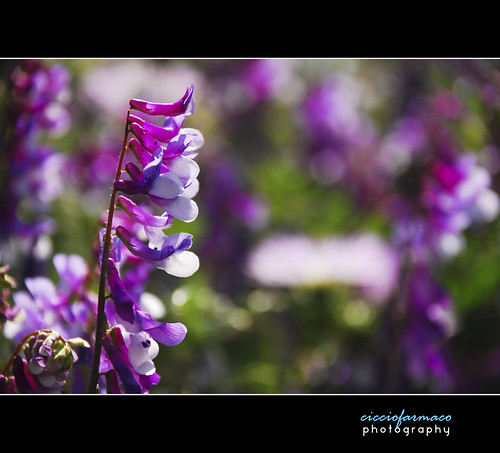 Catania - Just a purple bokeh