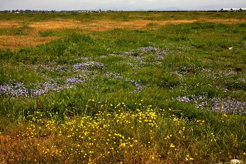 James K. Herbert Wetland Prairie Preserve