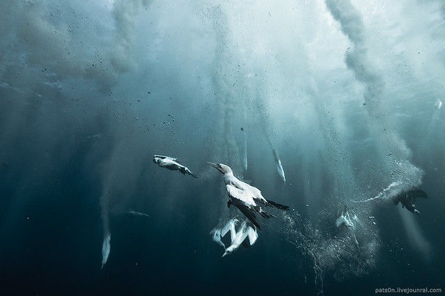 the sardine run #41