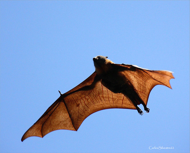 World's_Biggest_Bat http://www.flickr.com/photos/carlos386/4587543223/