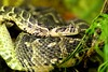 "<a href=""http://www.flickr.com/photos/michaelransburg/4589220744/"">Photo of Vipera ammodytes by Michael Ransburg</a>"