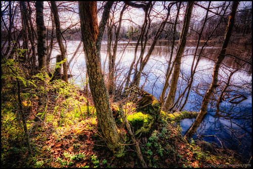 sky lake reflection water grass forest moss shore twigs hdr