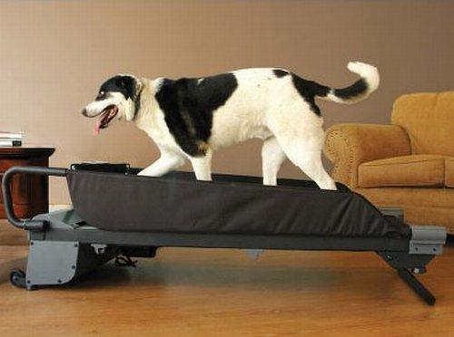 Caminadora para perros tecnodiva - Tapis de course pour chien ...