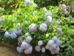 Elsong Gardens 6