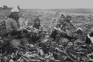 A Blackfoot family working as farm labourers on a sugar beet farm in Raymond, Alberta, 1910 / Famille pied-noir travaillant comme ouvriers agricoles dans une plantation de betteraves à sucre à Raymond, Alberta, 1910
