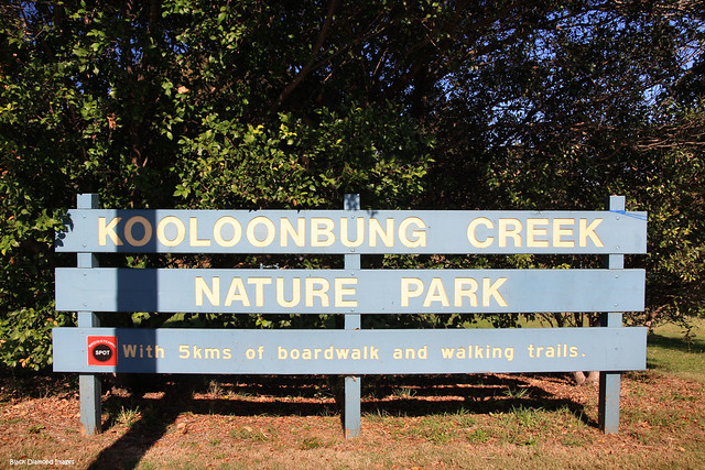 Kooloonbung Creek Reserve - Port Macquarie