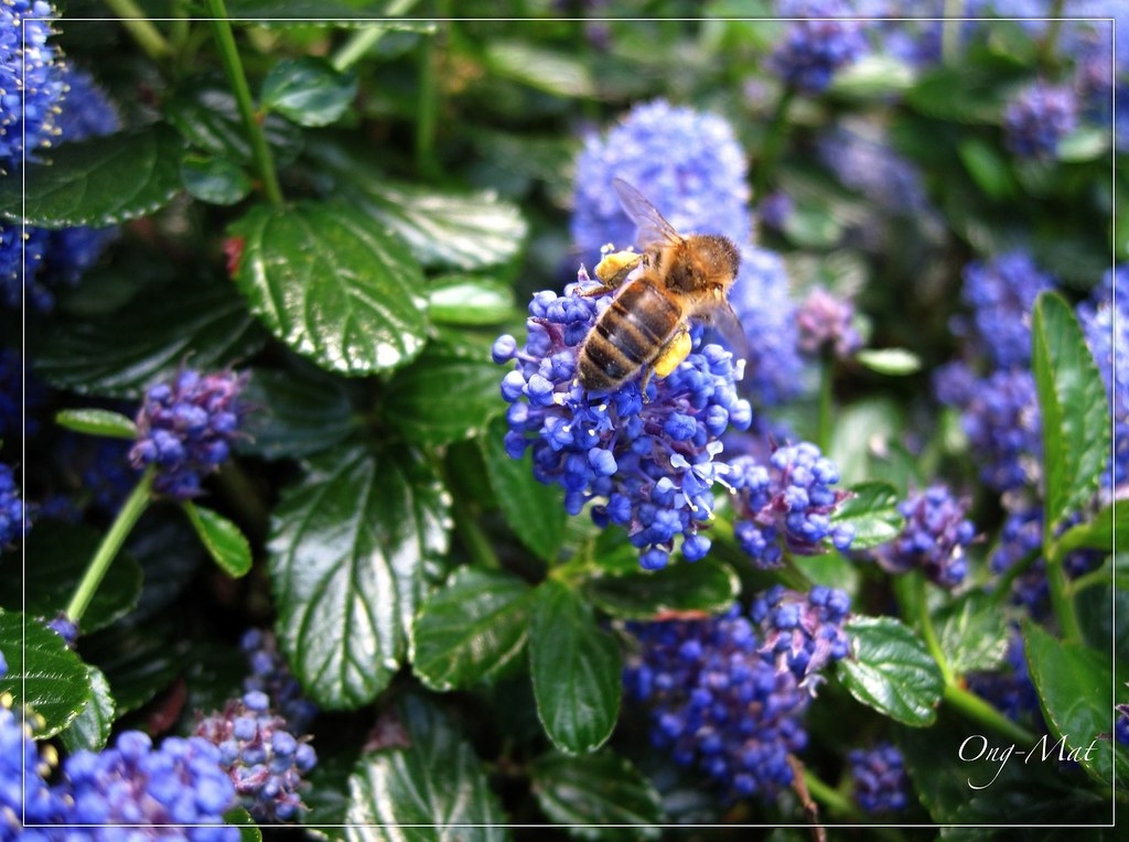 c anothe tapis bleu l 39 odeur de miel le blog de ong mat. Black Bedroom Furniture Sets. Home Design Ideas