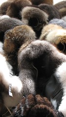 nose(0.0), textile(0.0), giant panda(0.0), ape(0.0), animal(1.0), fur(1.0), fur clothing(1.0), mammal(1.0), close-up(1.0), wildlife(1.0),