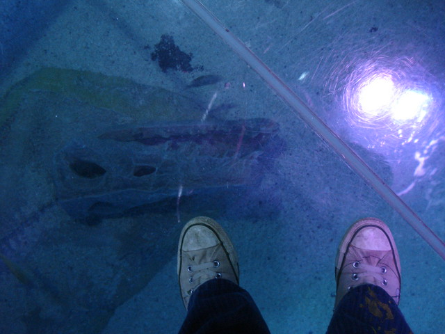 Sea Life Aquarium Phoenix Arizona Flickr Photo Sharing