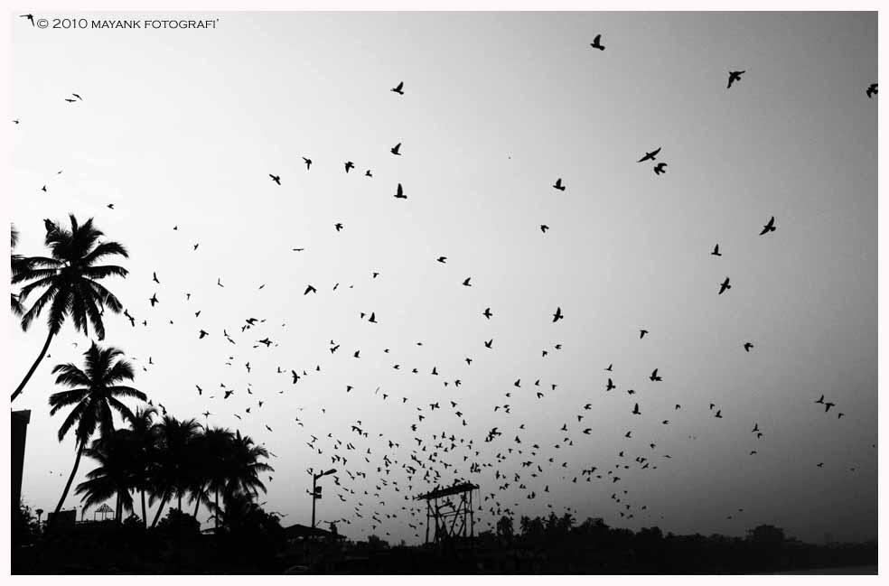 Wonderland - Mayank Pandey amateur photographer from Mumbai India online photo exhibition street [hotography black and white Маянк Пандей фотограф любитель из Мумбай Индия онлайн фотовыставка стрит фотография черно белый