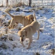 Sun, Oct 31st, 2010 Lost Male Dog - Rathowen, Mullingar, Westmeath