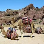 Afbeelding van The Outer Siq. camels siq petra jordan tourists