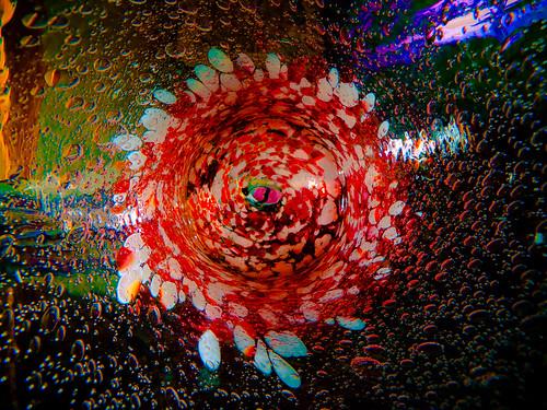 lumix nikon vivid panasonic speedlight 2009 soe sb25 golddragon dmclx3 spiritofphotography dmwlw46 artofimages dmwla4
