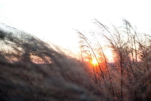 sunset manual 2470mm