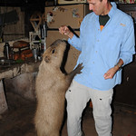 Dan Feeds a Hungry Capybara - Concepcion, Paraguay