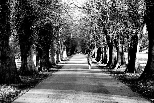 Lime Tree Avenue Wollaton by Melodysparks (Chris Preedy)