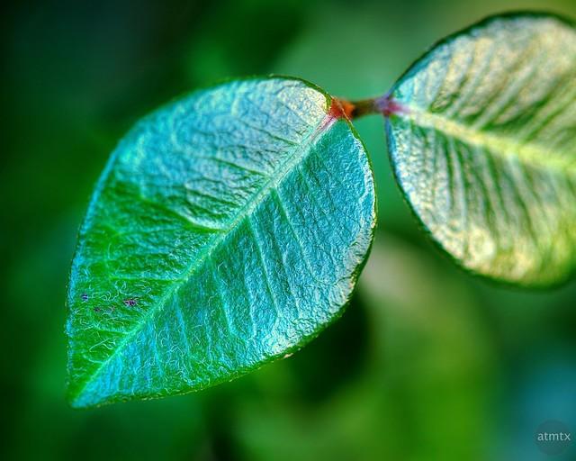 Shimmering Leaf