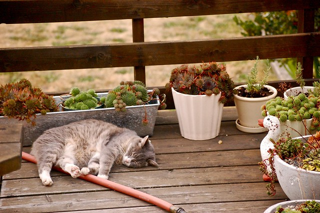 our little old lady cat asleep on the deck