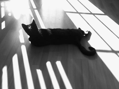 iphone sunny blackandwhite cat sunrise black light sun shadow blackcat pepper