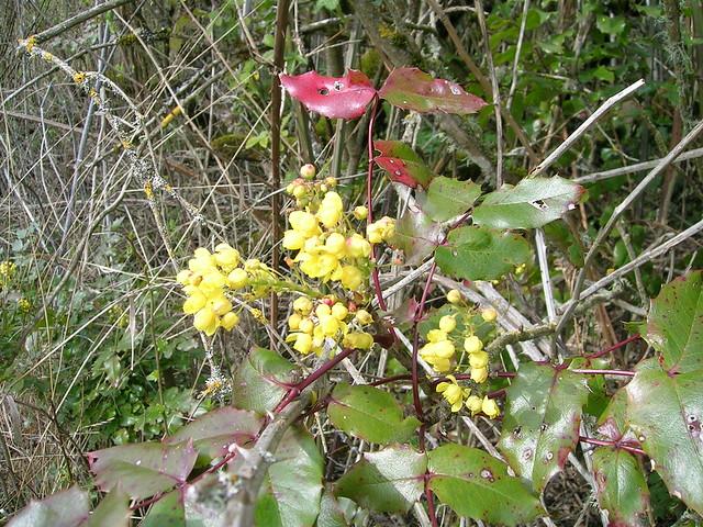 composition about beauty of nature La nature au service de la vie home regulatessenz.