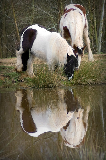 Horses playing in the pond flickr photo sharing for Negative show pool horse racing