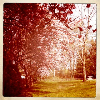 Walking under a pink canopy