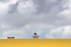 Alcácer do Sal, 2010.04.15