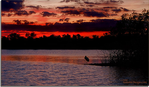 birds sunsets 2470mm floridaimages riverrookeries