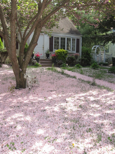 More Pink Snow