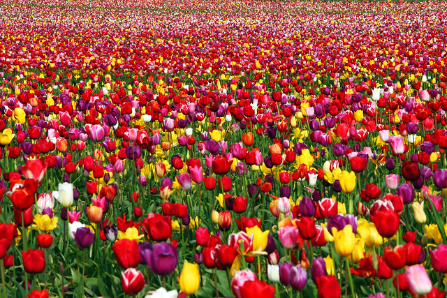 joyful runway a field of - Fields Of Color
