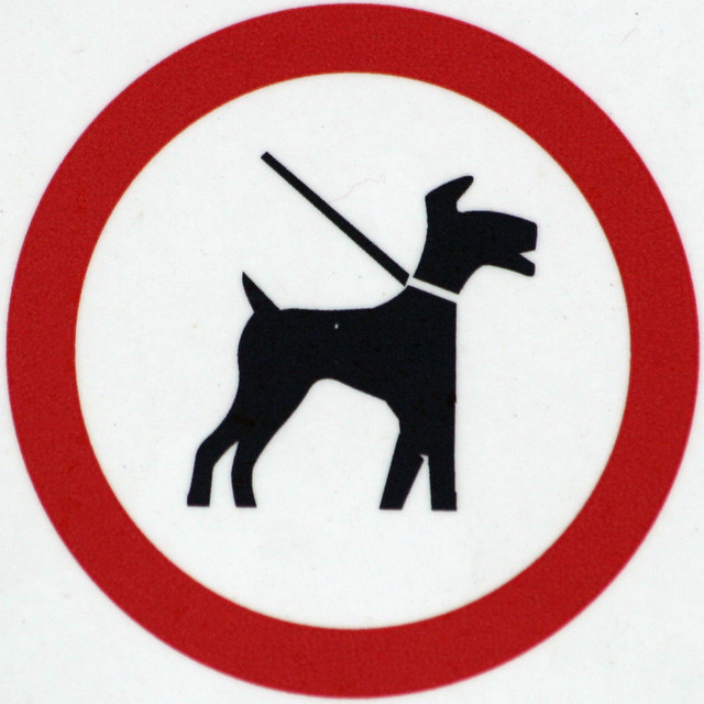 Dog Leads Uk Guildford