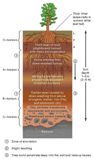 Soils I