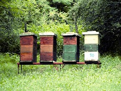 agriculture, green, apiary, beehive, rural area,