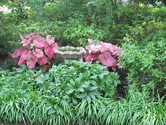 Elsong Gardens 3