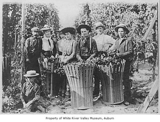 Titus hop ranch showing people posing with baskets filled with hops, Kent, ca. 1905