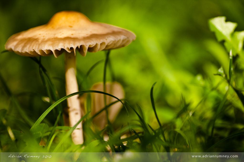 IMAGE: http://farm5.staticflickr.com/4041/4670477607_a95d0dcfb2_b.jpg