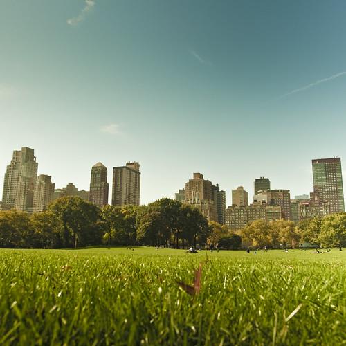 city blue sky ny newyork green geotagged nikon dof centralpark manhattan lightroom d700 nikond700 ledams copyrightledams©