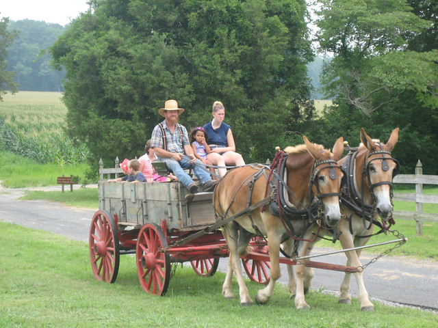 Wagon Rides are fun for people of all ages!