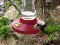 hummingbird(1.0), bird feeder(1.0), bird(1.0),