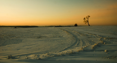 morning winter tree nature sunrise nikon lonely lithuania lonelytree d80 rambynas theunforgettablepictures