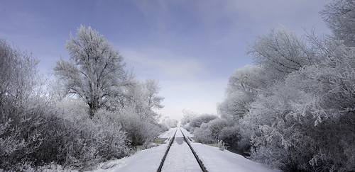 trees winter panorama snow train vanishingpoint path tracks logan