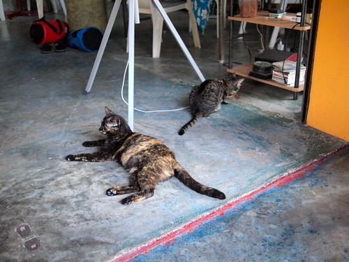 Cats at the diving shop