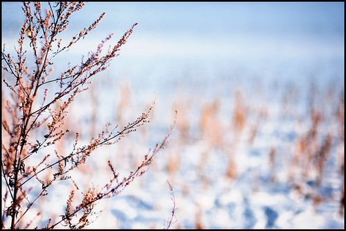 winter bokeh par andreas gessl