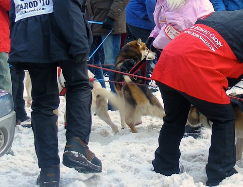 4412633767 573852ddf4 Iditarod 2010 ceremonial start