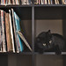 sam on the record shelf by forkknifeandspoon