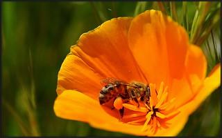 Pollen Ball Hauler