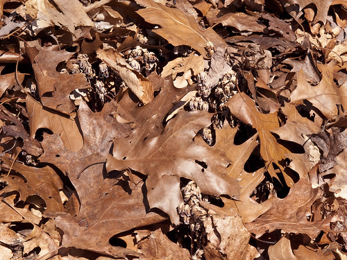 covered by leaf litter