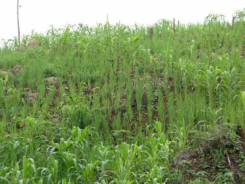 plants mountains latinamerica landscapes panama centralamerica 2007 herrera centroamerica américalatina gpsapproximate
