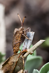 arthropod, locust, animal, cricket-like insect, leaf, nature, invertebrate, insect, macro photography, grasshopper, fauna, close-up, wildlife,