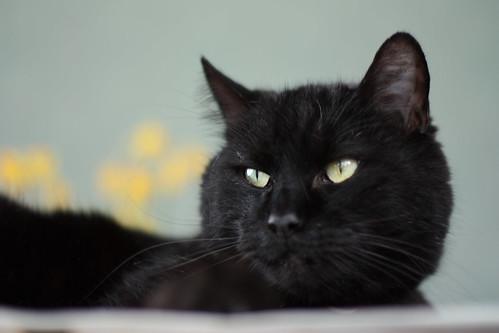 moka, the emperor